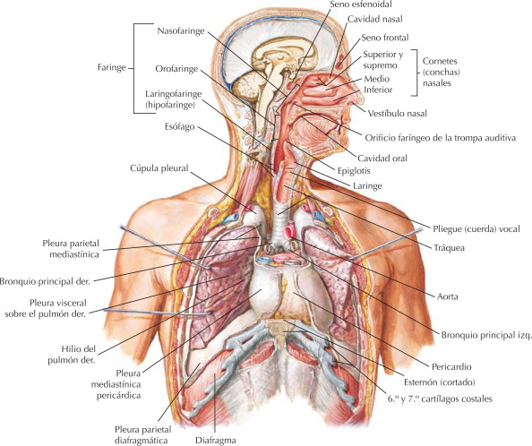 Planos anatómicos sistema