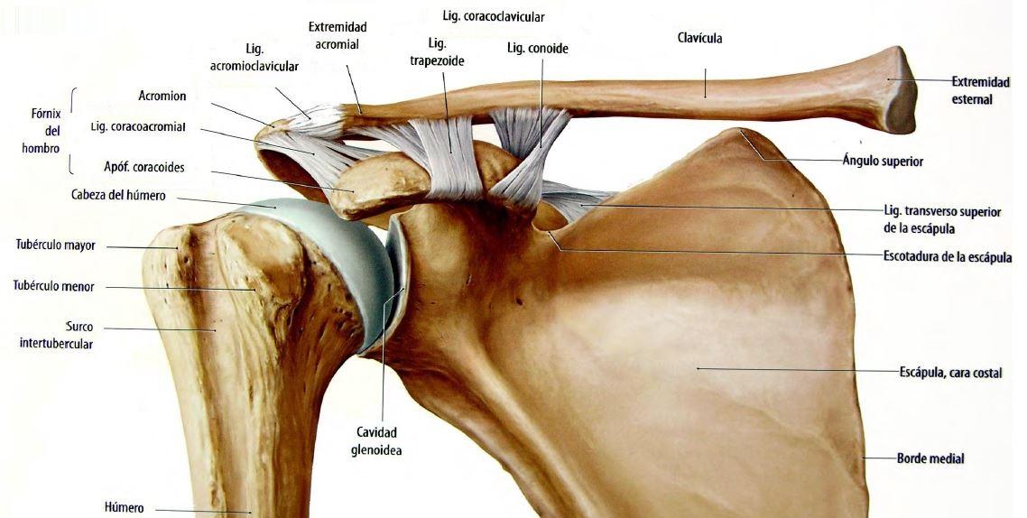 planos de huesos